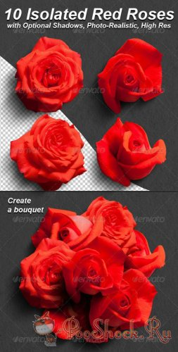GraphicRiver 10 Photo-Realistic Isolated Red Roses